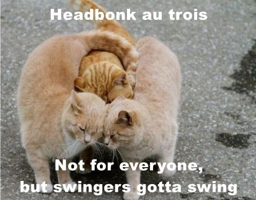 animals head swing three caption french Cats bonk - 8803964672