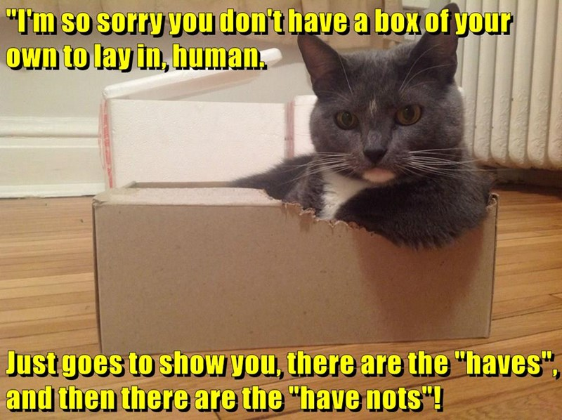 animals cat have box haves have nots dont caption so sorry - 8803964928