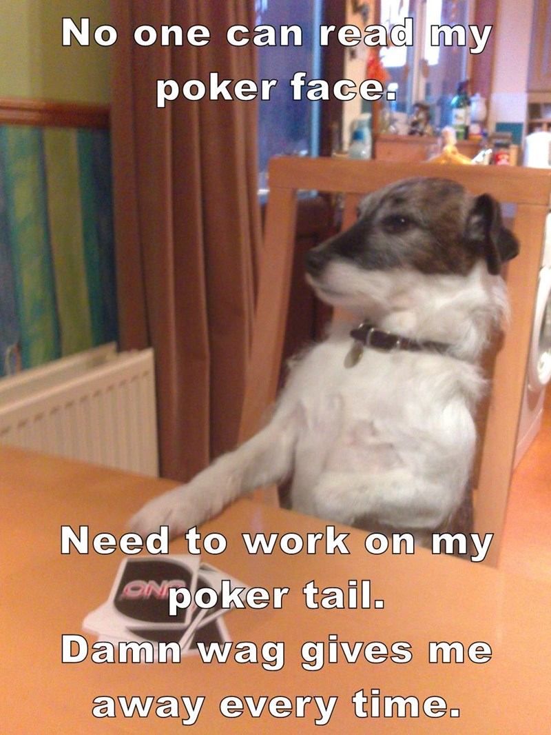 animals dogs wag no one read poker face tail caption poker