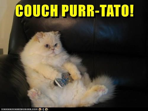 animals cat purr caption couch potato - 8803985920