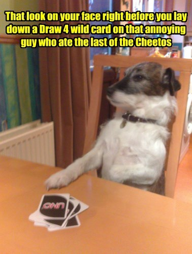 dogs ate guy caption card cheetos wild