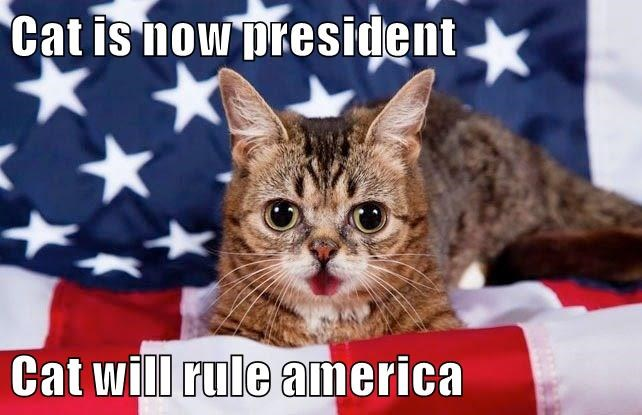 lil bub,president,america,caption,Cats