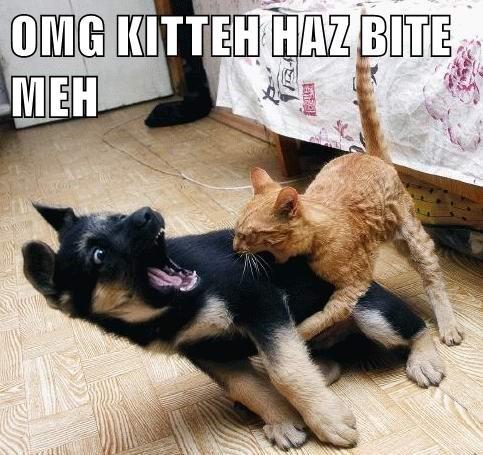animals puppy kitten bite caption - 8804027904