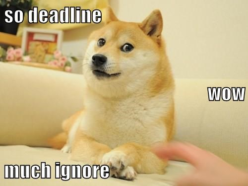 memes animals doge deadline ignore caption - 8804057088