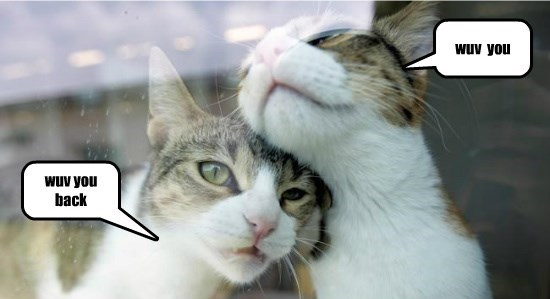 you wuv love back caption Cats - 8804099840