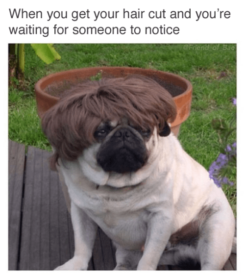 image pug hair Notice Anything Different?