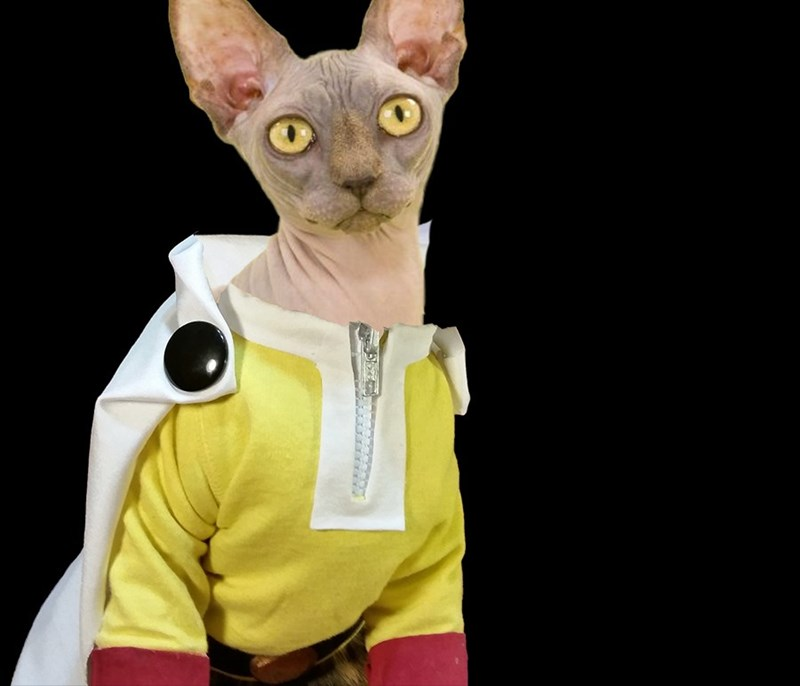 anime Cats one-punch man - 8804232704