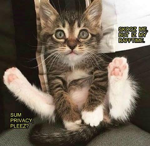 privacy p!ease bath time kitten caption - 8804252160