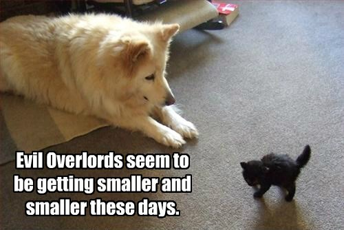 basement cat dogs kitten evil caption