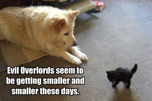 basement cat dogs kitten evil caption - 8804333312