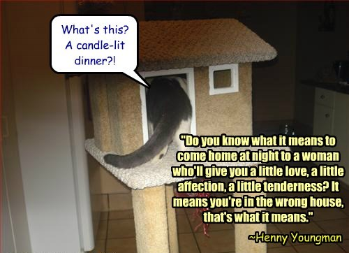 cat house affection wrong dinner love candle-lit caption - 8804392704