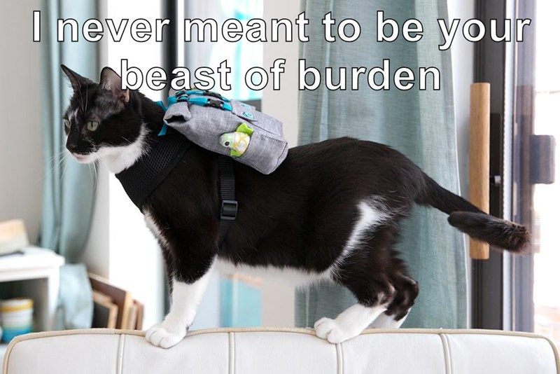 I never meant to be your beast of burden