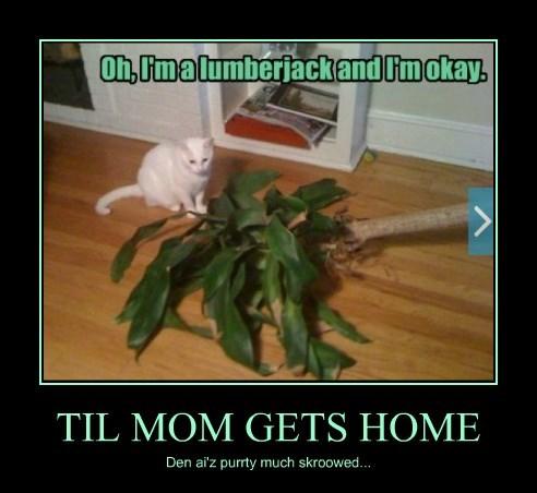 TIL MOM GETS HOME