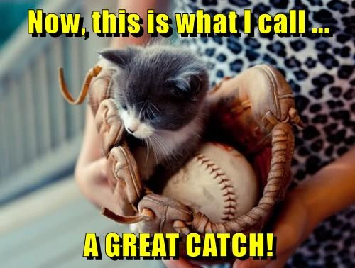 animals baseball Cats caption kitten catch - 8804483584