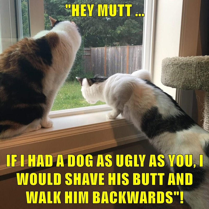 """HEY MUTT ... IF I HAD A DOG AS UGLY AS YOU, I WOULD SHAVE HIS BUTT AND WALK HIM BACKWARDS""!"