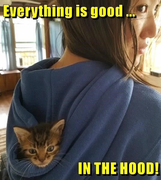 Cats,caption,hood,good