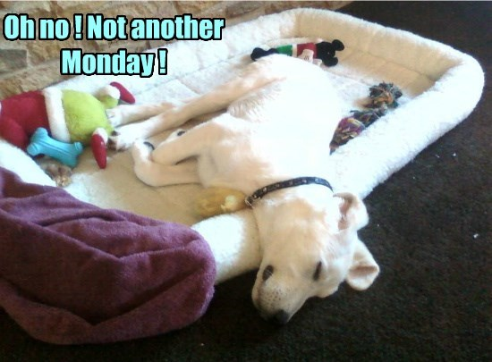 dogs bed sleep caption monday - 8804507392