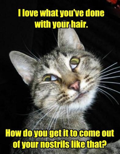 hair nostrils love caption Cats - 8804533760