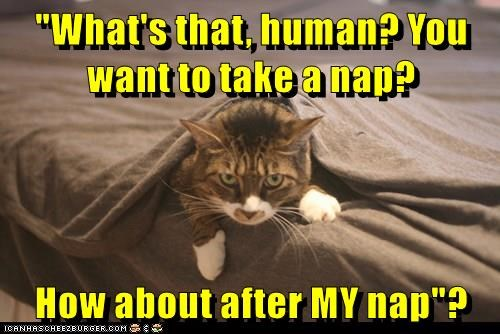 animals bed nap human caption Cats - 8804567040