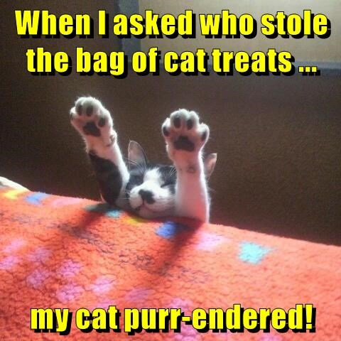 When I asked who stole the bag of cat treats ... my cat purr-endered!