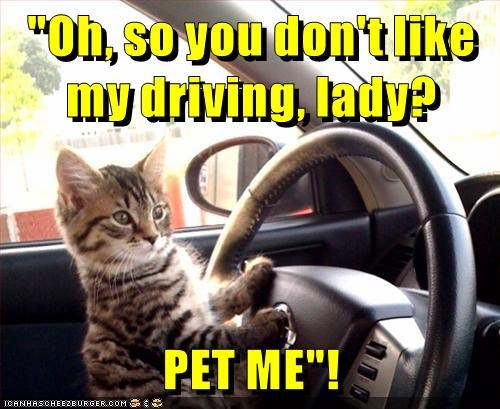 animals like me kitten my driving pet dont caption