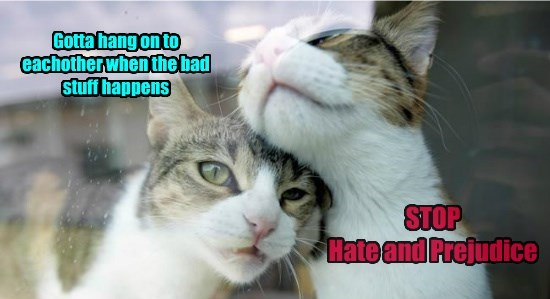 hate hang on prejudice other each caption stop Cats - 8804588032