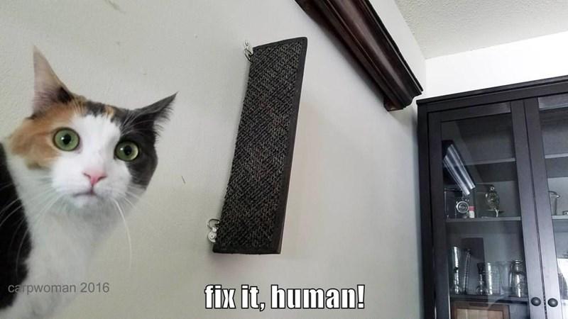 fix it, human!