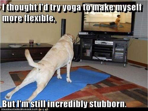 I thought I'd try yoga to make myself more flexible, But I'm still incredibly stubborn.