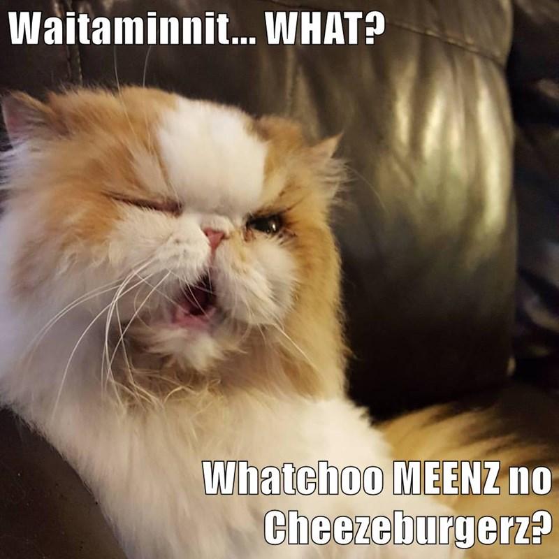 Waitaminnit... WHAT?  Whatchoo MEENZ no Cheezeburgerz?