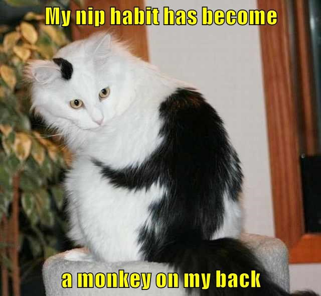 Cheezburger Image 8804628736