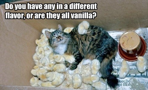 cat have vanilla flavor caption different all - 8804722688