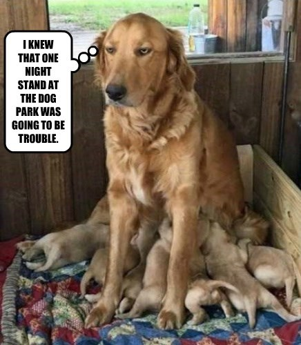 dogs puppies park caption trouble one night stand - 8804775168