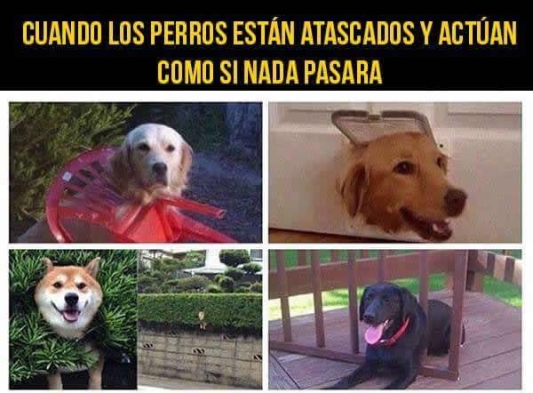 perros atascados