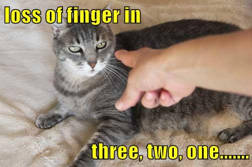 animals finger caption Cats - 8804843264