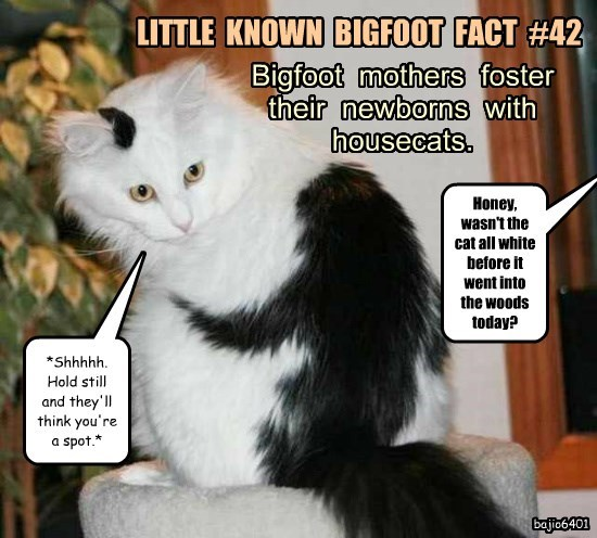 Cheezburger Image 8804879872