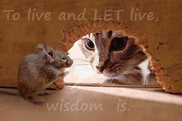 To live and LET live,         wisdom  is.