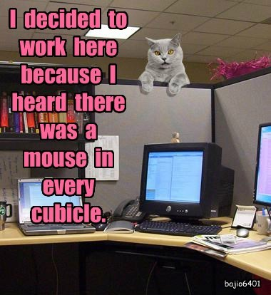 work caption Cats cubicle mouse - 8804919552