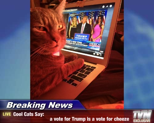 Breaking News - Cool Cats Say:                            a vote for Trump is a vote for cheeze