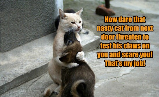 cat job threaten scare nasty next door my test caption claws - 8805094144