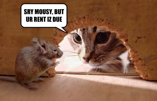 Cats,caption,due,rent,mouse
