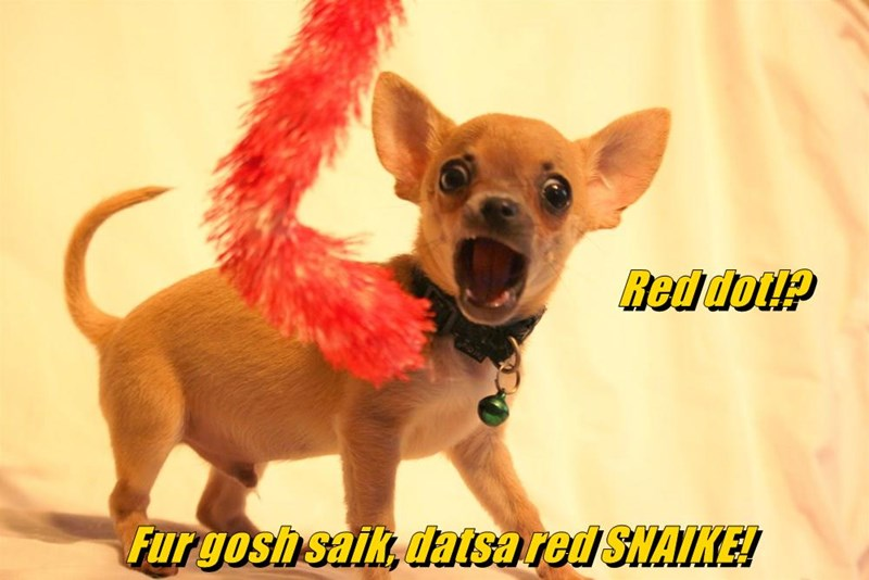 animals scary dogs red chihuahua dot caption boa snake