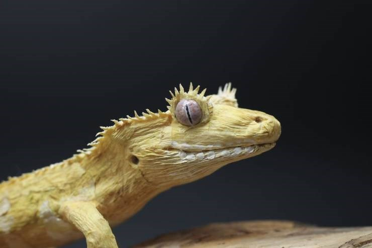 paper sculpture artist reptiles insects