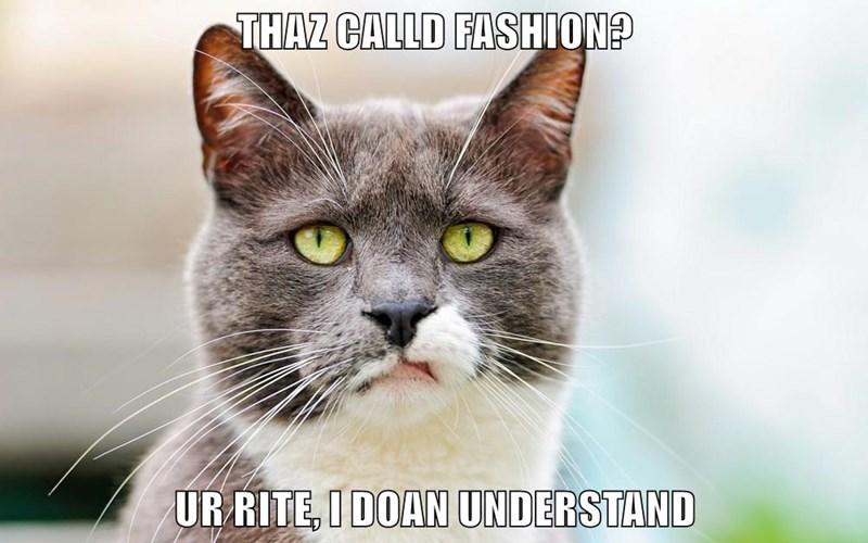 animals fashion Cats caption judge