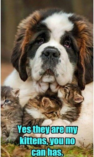 kitten can has caption no dogs - 8805157376
