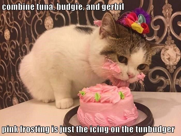 combine tuna, budgie, and gerbil pink frosting is just the icing on the tunbudger