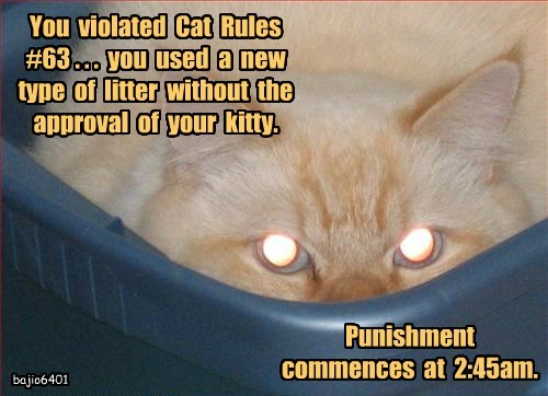 You  violated  Cat  Rules  #63 . . .  you  used  a  new  type  of  litter  without  the  approval  of  your  kitty.