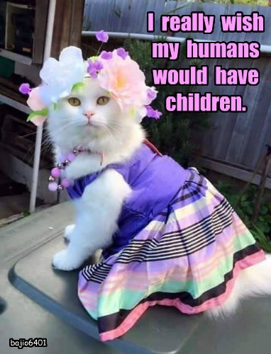 human,caption,dress,Cats,children