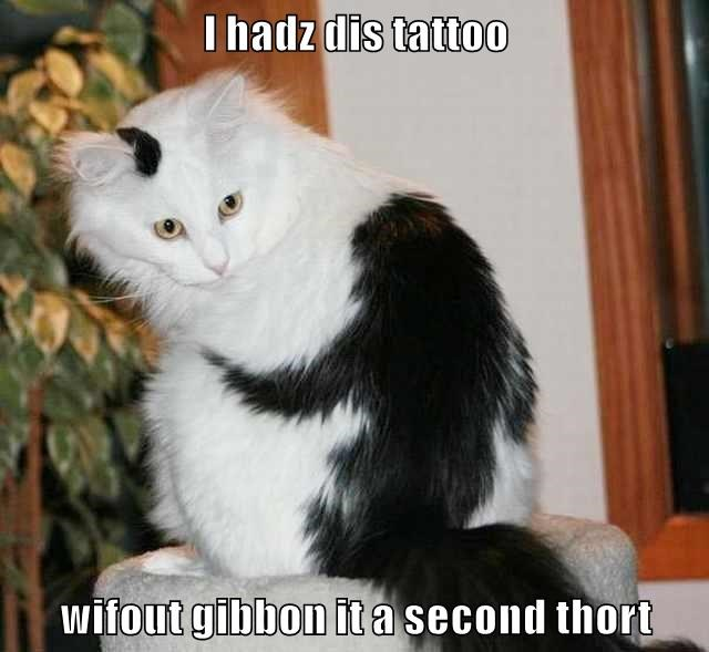 animals cat gibbon thought (giving) second tattoo caption - 8805195008