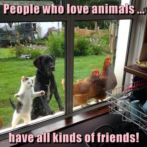 animals - 8805376512
