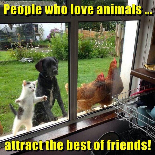 animals - 8805377536